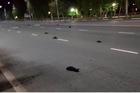 Người Nga sợ điềm xấu vì chim rơi rụng, chết đầy đường