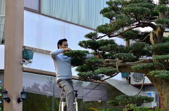 'Tay chơi' Hà Nội bán nhà trên phố để sở hữu cây tùng hơn 300 năm tuổi