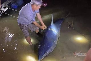 Cá mập xanh nặng 2 tạ, dính lưỡi câu dạt vào sông Bến Hải