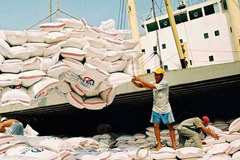 Vietnam's rice exports to EU sell at good prices