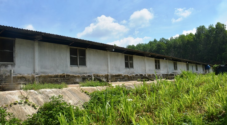 Phạt 17 triệu, trại heo ở Quảng Nam vẫn liên tiếp xả thải 'tra tấn' người dân