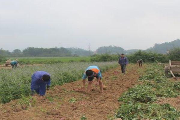 Xã Giai Xuân đạt chuẩn nông thôn mới