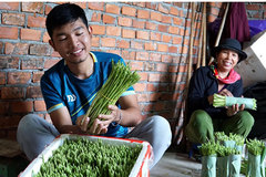 Young farmer succeeds with growing organic asparagus