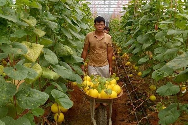 Nông nghiệp Thanh Hóa: Chính sách hay, được triển khai tích cực