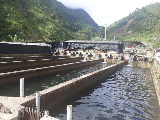 'Chỉ huy' hàng vạn con cá 'quý tộc' không xương, nông dân 9X tỉnh Lai Châu thu cả tỷ đồng