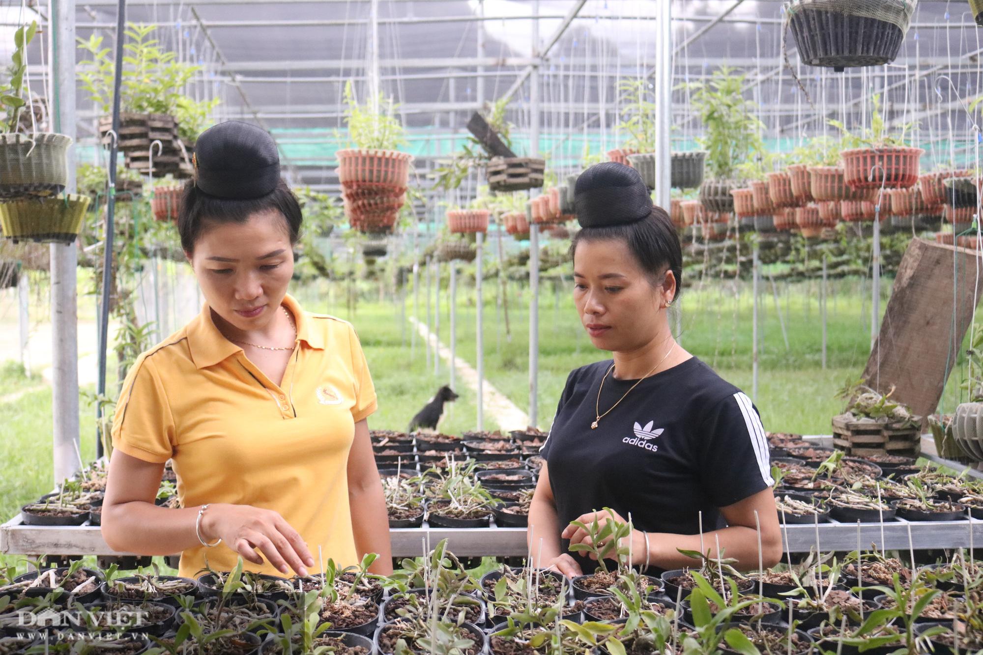 Vườn lan 'khủng' trên 6.000 giò của cô gái Thái ở Sơn La, ai nhìn cũng choáng