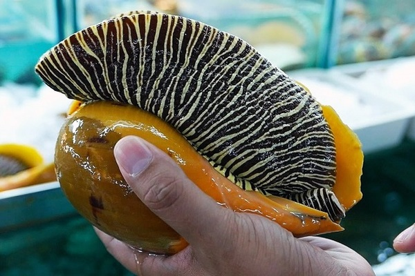 Rao bán ốc biển khổng lồ, nặng 2kg đủ 5 người ăn