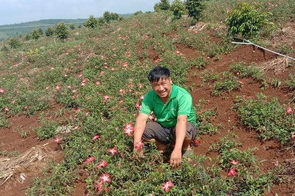 Từ phận làm thuê đến người trồng khoai lang nhiều nhất ở Đắk Nông