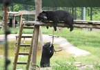 Vietnam Bear Rescue Center provides help to nearly 200 bears