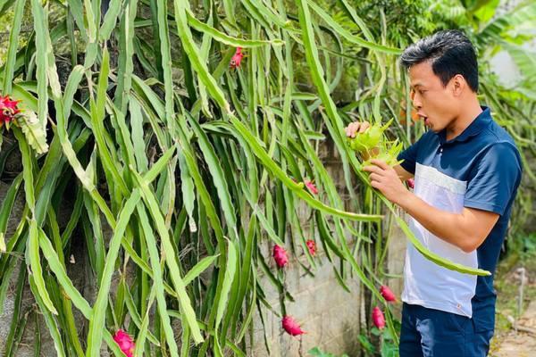 Nhà vườn 1300m2 nhiều hoa, quả của vợ chồng Hồng Đăng