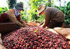 Trade deal expected to stimulate Vietnamese coffee exports to EU