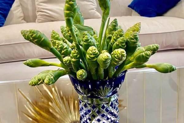 Hoa màu xanh trên núi cao cắm đẹp, ăn ngon: Gom tiền triệu mỗi ngày