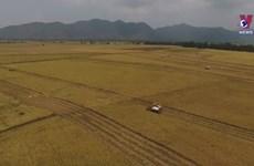Agriculture: Backbone of Vietnam's economy