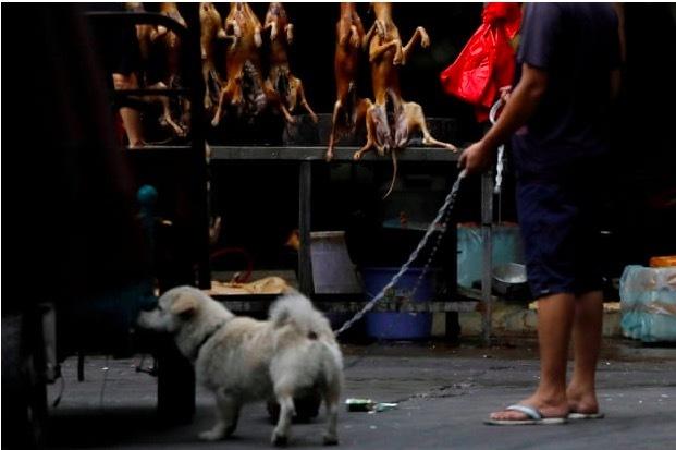 Vì sao người Hàn Quốc không còn thích ăn thịt chó?
