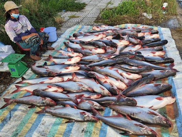catfish,vietnamese seafood export