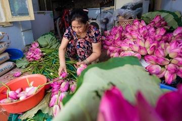 Đại gia Hà Nội tìm mua 'đệ nhất trà' đắt nhất Việt Nam giá 10 triệu đồng/kg