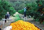 Nỗi kinh hoàng của lao động nước ngoài làm việc tại nông trại Australia