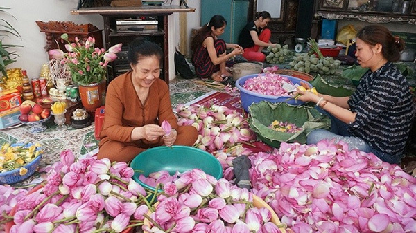 Lotus tea,Tay Ho lotus