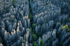 Ớn lạnh khu rừng đá sắc như lưỡi dao – nơi hiểm trở bậc nhất thế giới