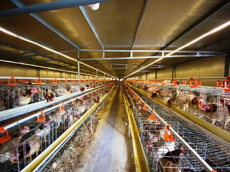 Vietnam to develop livestock sector