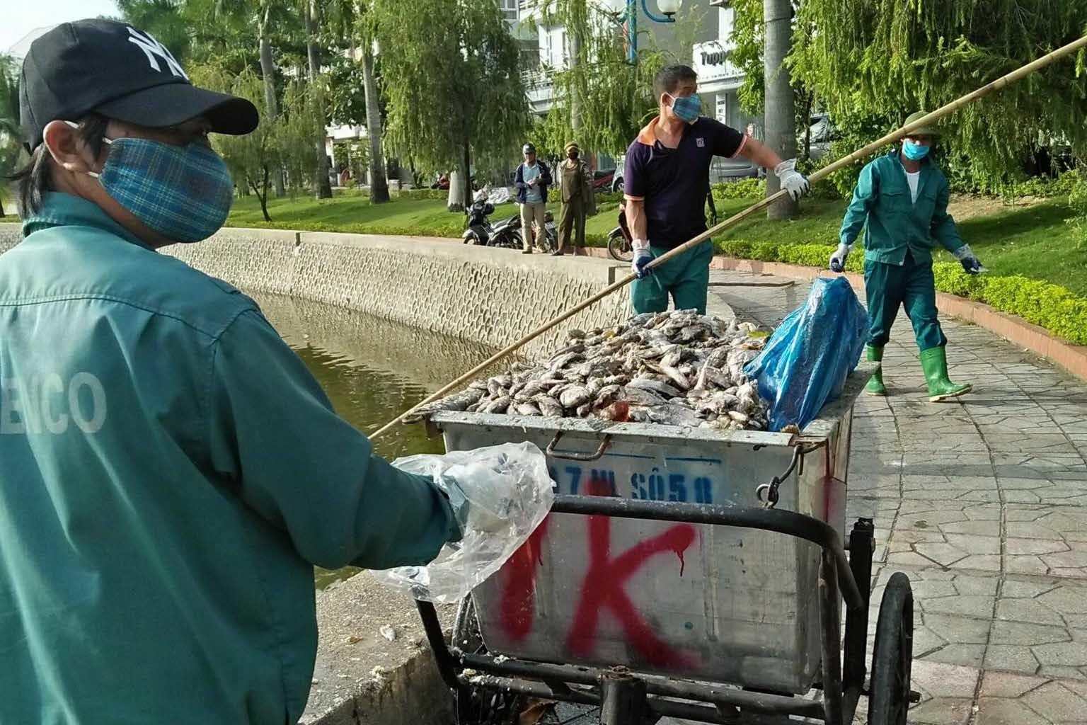 Cá lại chết trắng hồ điều hòa ở Quảng Ninh, nhân viên vớt không xuể
