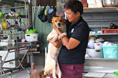 Woman devotes her life to disabled and stray animals
