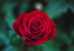Những lời chúc ngày 20/10 ý nghĩa nhất dành tặng mẹ