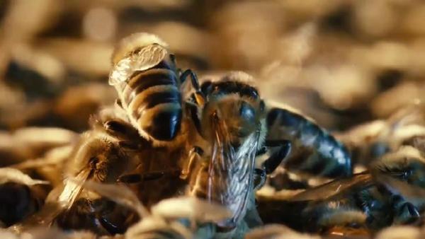 Những công dụng ít biết của keo ong