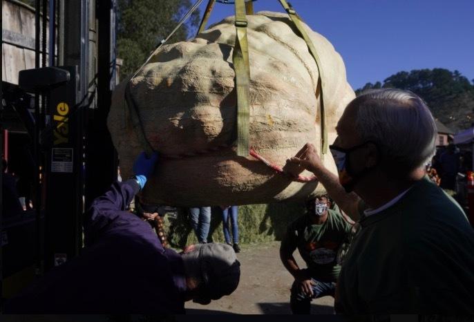 Chủ quả bí nặng cả tấn tiết lộ bí quyết tạo ra trái khổng lồ
