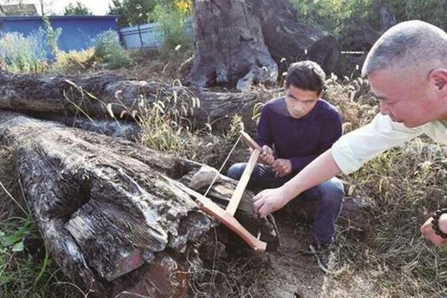 Khúc gỗ bỏ xó trong vườn, ngỡ ngàng khi biết giá trị thật