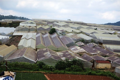 Development of greenhouses threatening landscape in Da Lat