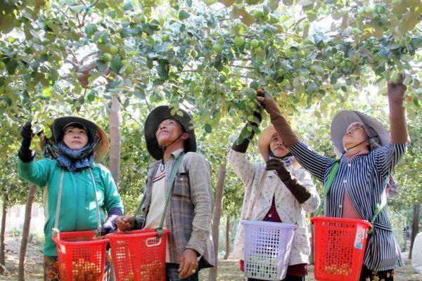 Huyện Ninh Phước đạt chuẩn nông thôn mới