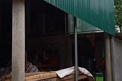 Nhà chống lũ chi phí rẻ, an toàn qua mưa lũ ở miền Trung
