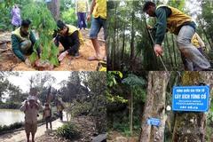 """Hành trình trồng loài cây """"hiếm có khó tìm"""" trên non thiêng Yên Tử"""
