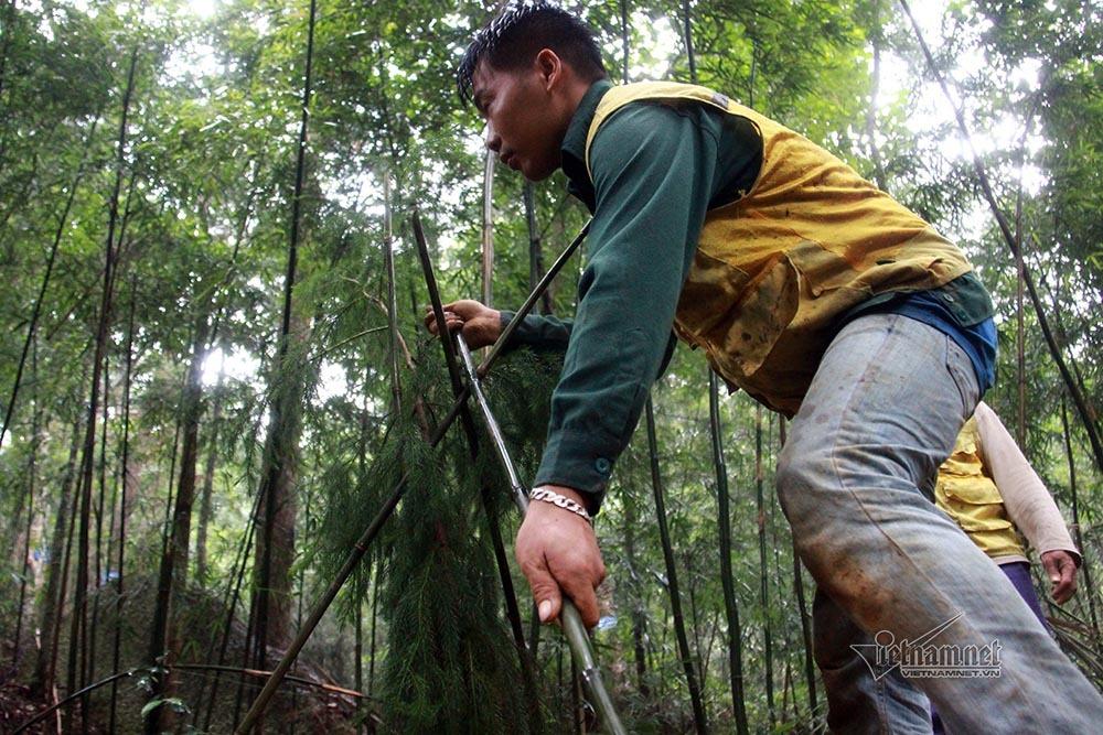 Hành trình trồng loài cây 'hiếm có khó tìm' trên non thiêng Yên Tử