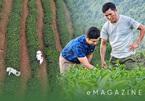"""Mười năm gieo """"vàng xanh"""", nông dân Lai Châu làm nên những quả đồi triệu USD"""