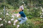 Vì yêu hoa, nữ giáo viên khởi nghiệp bằng vườn hồng 2.000 gốc