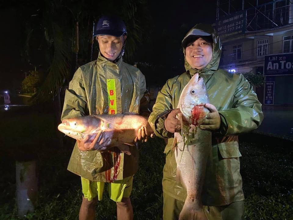 Lũ ngập chưa từng có, người Hà Tĩnh đổ xô ra quốc lộ bắt cá