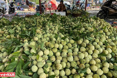 Sweet flavor of Chi Lang custard apples
