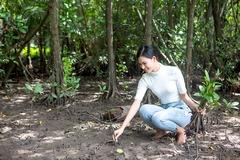 Thái Thị Hoa lội bùn trồng cây ở rừng ngập mặn Cần Giờ