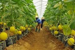 Bình Dương: Hướng đến một nền nông nghiệp sạch gắn với xuất khẩu