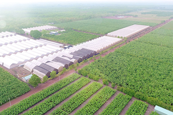 Bình Dương: Nông nghiệp công nghệ cao hướng phát triển bền vững