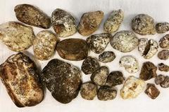Hòn đá xấu xí, khúc gỗ mục nát bất ngờ có giá hàng chục tỷ đồng