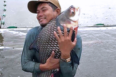 Nông dân nuôi cá quý hiếm to bự, nuôi cá koi lạ mắt, cứ bắt bán 1 con thu hàng triệu đồng