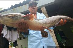Bắt được con cá trê to lạ, dài 1 mét, nặng 8 kg, dân kéo đến xem