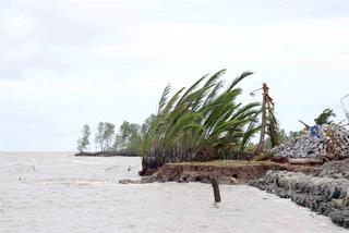 Ca Mau declares emergency as western sea dyke is badly eroded