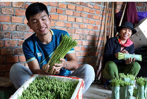 Cất bằng kinh doanh quốc tế, trai 9X về làng trồng 'rau vua', kiếm nửa tỷ mỗi năm