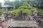 Những 'tay chơi' khét tiếng làng cây cảnh: Kẻ bán nhà, người từ bỏ siêu xe