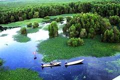 HSBC Vietnam to spend VND10bn to revive mangrove forest in Vietnam