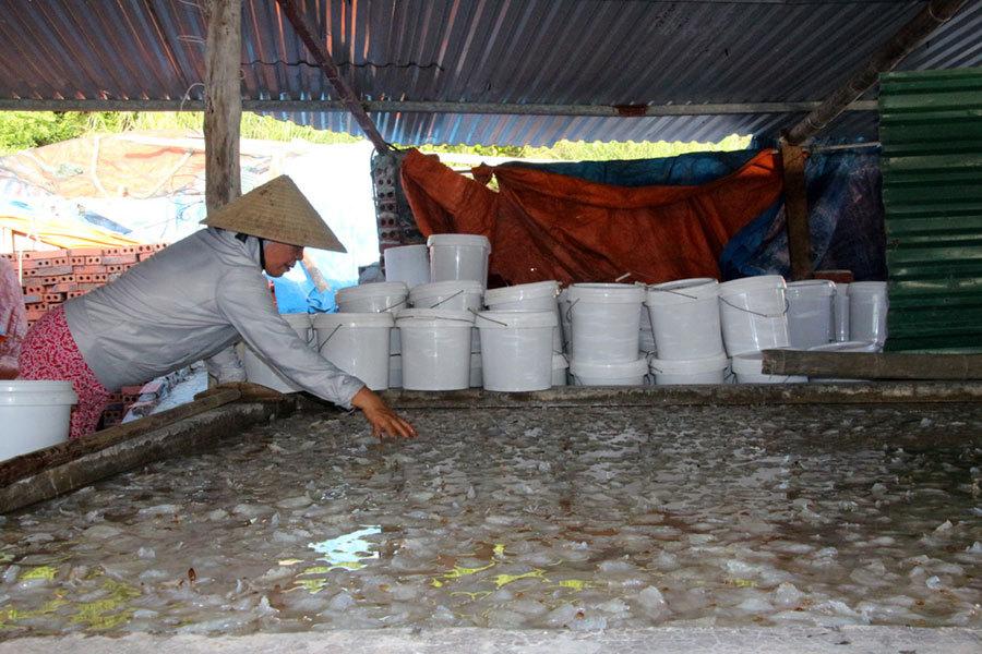Thương lái Trung Quốc ngừng mua, làng sứa Cô Tô hoang tàn lạ thường, dân chế biến sứa lỗ tiền tỷ